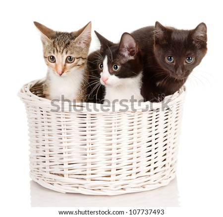 Kittens in basket. isolated on white background - stock photo