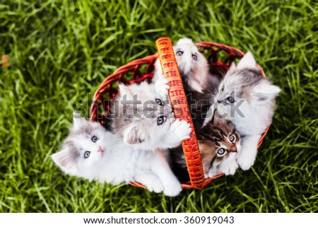 Kittens in the basket - stock photo