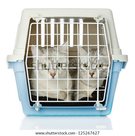 Kittens in transport box. isolated on white background - stock photo