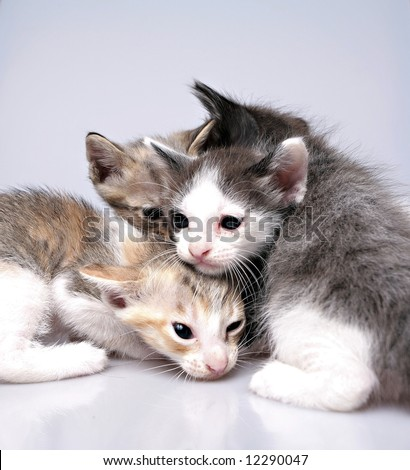 Kittens play while keep warm together - stock photo