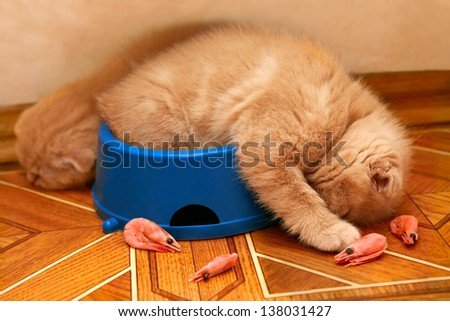 Kittens sleeping after meals in a bowl - stock photo