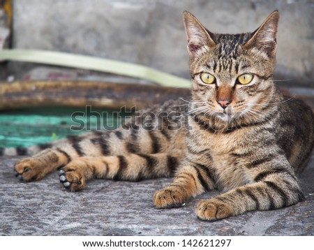 kitty - stock photo