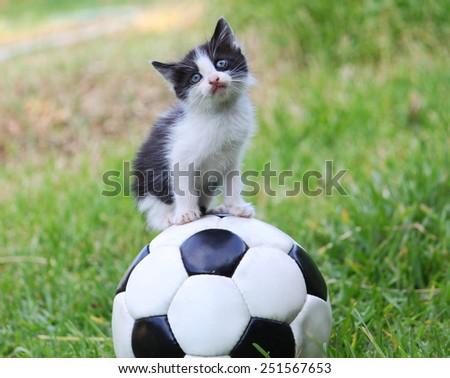 Kitty on a ball - stock photo