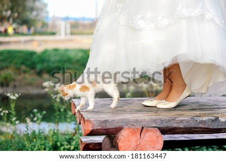 Kitty under white bride dress and bride feet on wooden table - stock photo