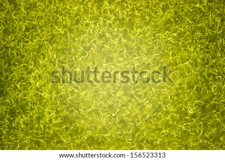 Klamath Lake Close up Shallow Water Cyanobacteria Blue Green Algea - stock photo