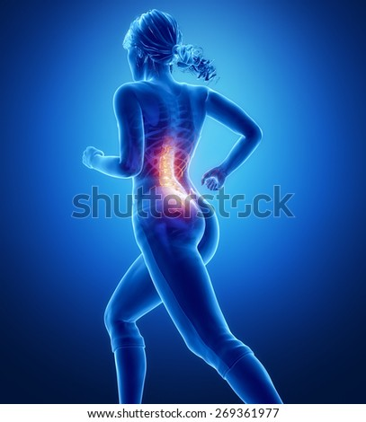 Knee anatomy - stock photo