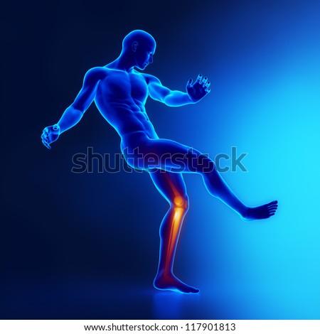 Knee joints sportsman anatomy - stock photo