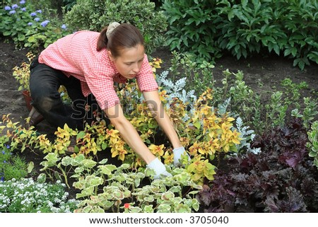 Kneeled young woman planting out flowers in a garden - stock photo