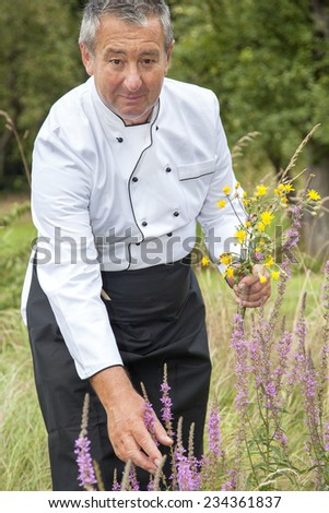 Koch collects herbs - stock photo