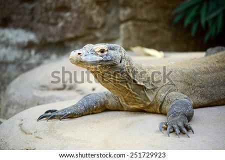 Komodo dragon - stock photo