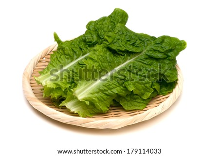 Korean Lettuce-Lactuca sativa, This image is available for clipping work.  - stock photo