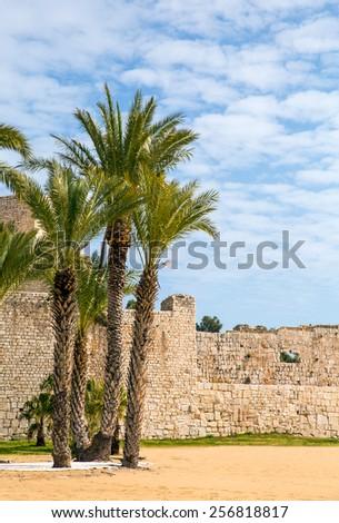 Korykos Castle and palm trees, Mersin - stock photo