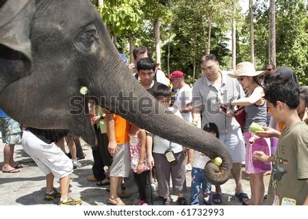 KUALA GANDAH, MALAYSIA - SEPTEMBER 25 : Visitors to Kuala Gandah Elephant Orphanage Sanctuary feeding the elephant during the Elephant Awareness Program September 25 2010 in Kuala Gandah, Malaysia. - stock photo