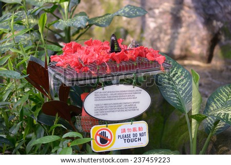 Kuala Lumpur, Malaysia - November 2, 2014: Feeder for butterflies in the Butterfly Park - stock photo