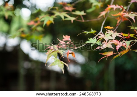 KYOTO, JAPAN - NOVEMBER 16, 2014: Autumn Scene of Arashiyama forest, Kyoto.  - stock photo