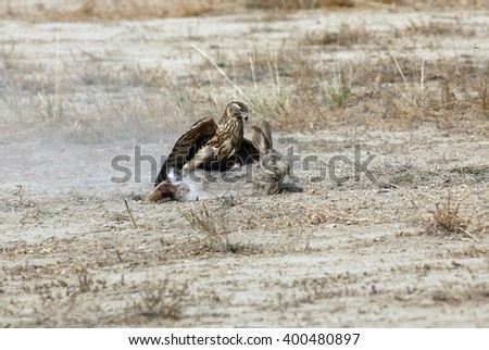 Kyrgyzstan. Hunting with eagles. - stock photo