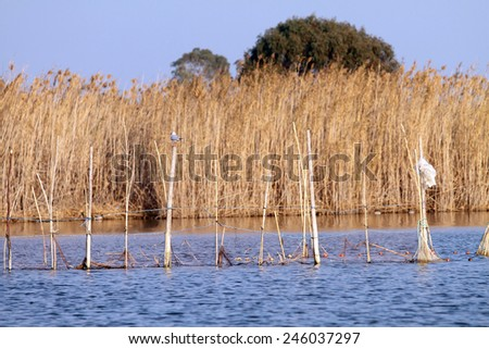 La Albufera nature reserve, El Palmar, Valencia, Comunidad Valenciana, Spain.  - stock photo