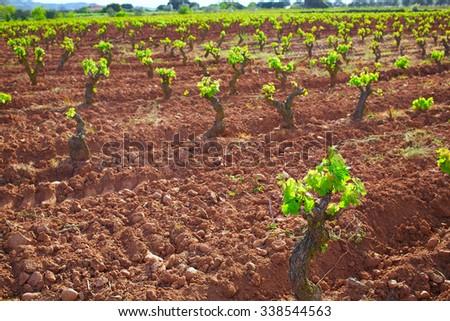 La Rioja vineyard fields in The Way of Saint James - stock photo