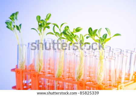 Lab experiment with green seedlings - stock photo