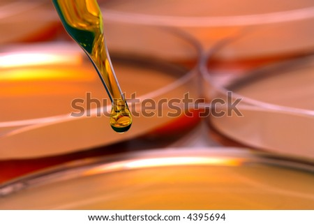 Laboratory pipette with drop of yellow liquid above petri dishes for an experiment in a science research lab  - stock photo