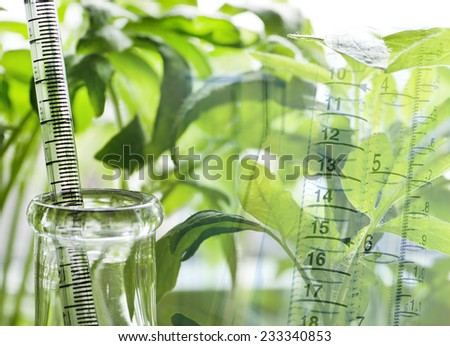Laboratory plant  - stock photo