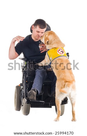 Labrador guide dog picked up his owner's keys from the ground and hands them to him. - stock photo