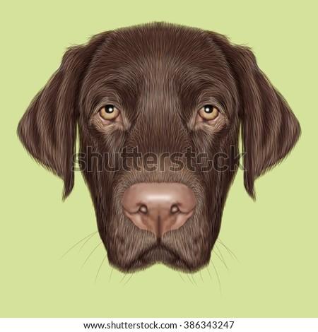 Labrador Retriever Dog portrait. Illustrated portrait of Chocolate Labrador on green background. - stock photo