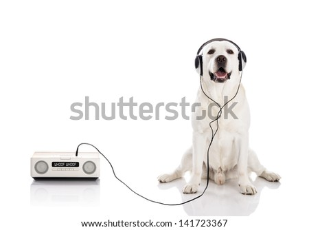 Labrador retriever listen music with headphones - stock photo