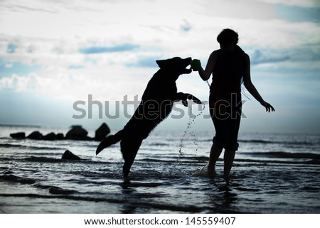 Labrador retriever on the beach - stock photo