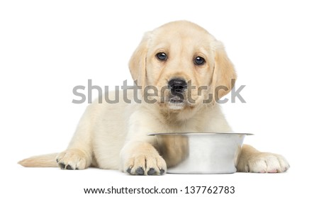 Labrador Retriever Puppy, 2 months old, lying down with metallic dog bowl, isolated on white - stock photo