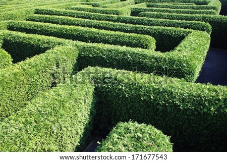 labyrinth inner ear meander maze - stock photo