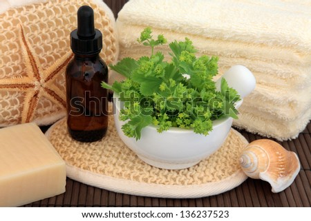 Ladies mantle herb leaf sprigs with aromatherapy essential oil bottle and spa accessories. Alchemilla. - stock photo
