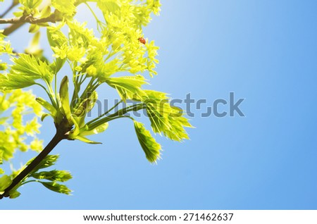 Lady Bug at Green Branch in Springtime Over Blue Sky - stock photo