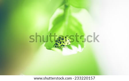 lady bug on a leaf. concept about nature and animals - stock photo