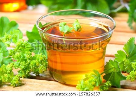 Lady's mantle tea - stock photo