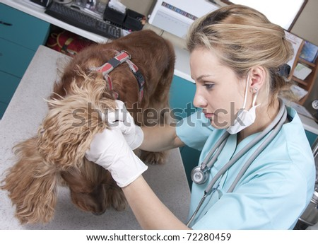 Lady vet with dog in her office - stock photo
