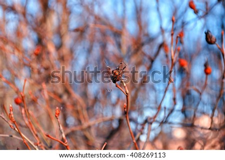 Ladybird bug sitting on the tree branch in the sunset forest. Shallow depth of field. Soft filter processing - stock photo