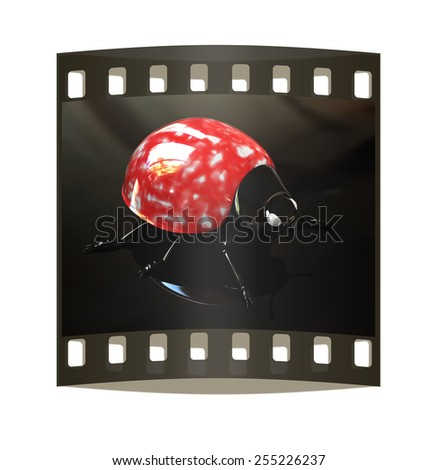 Ladybird on aon a black background. The film strip - stock photo