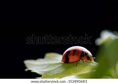 ladybird on leaf - stock photo