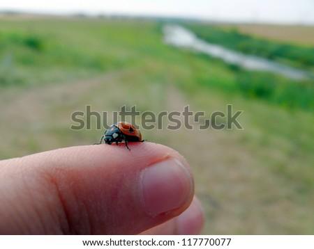 Ladybird seats in human finger - stock photo