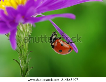 Ladybug and flower on a green background - stock photo