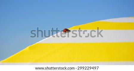 Ladybug climbing over beach umbrella. Vacation background. - stock photo