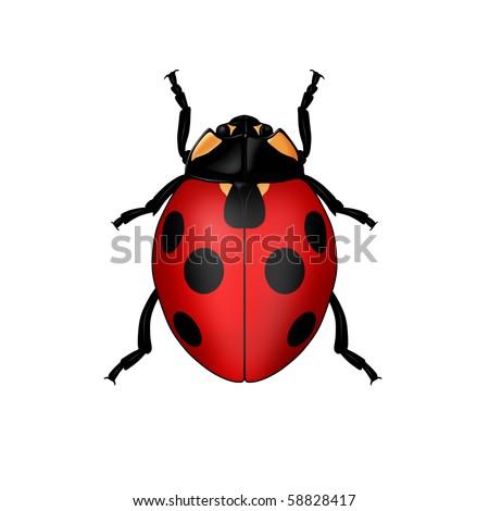 Ladybug isolated on a white background - stock photo