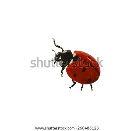 Ladybug isolated on the white - stock photo