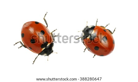 Ladybug isolated on white background - stock photo