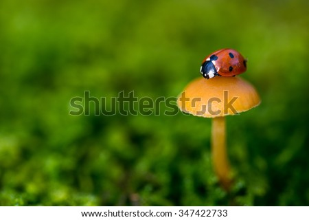 Ladybug on a mushroom, close up with small depth of field - stock photo