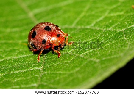 Ladybug on leaf - stock photo