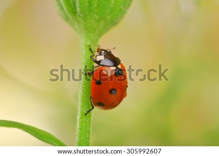 Ladybug on leaf, closeup - stock photo