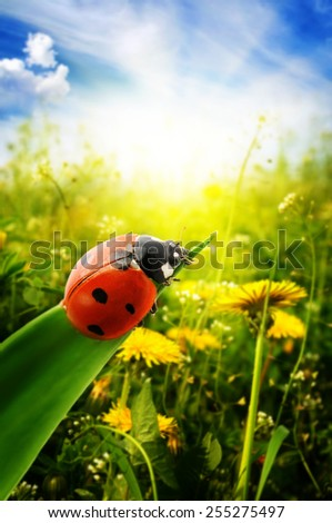 Ladybug on spring green field - stock photo