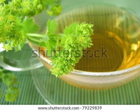 Ladys mantle tea - stock photo